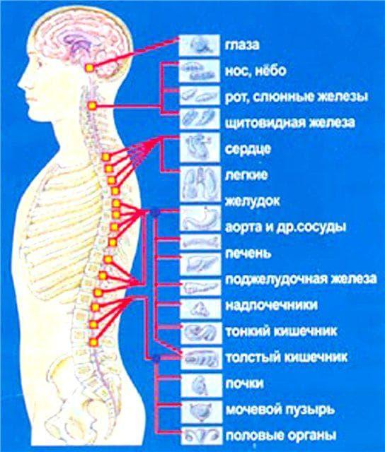 общий массаж тела схема проведения