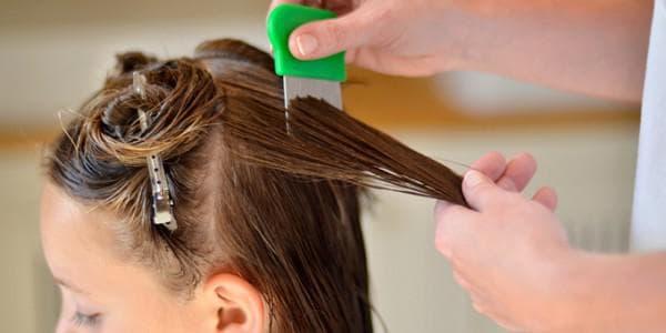 Умрут ли вши если покрасить волосы. Живут ли вши на окрашенных волосах
