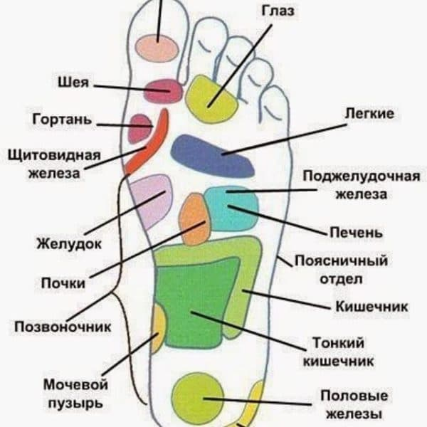 ступня ноги точечный массаж какие органы