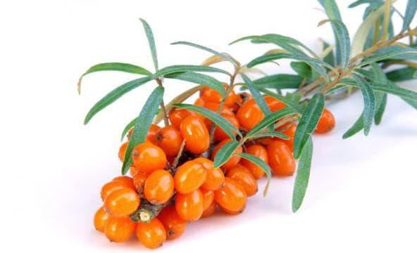 облепиховые ягоды и листья