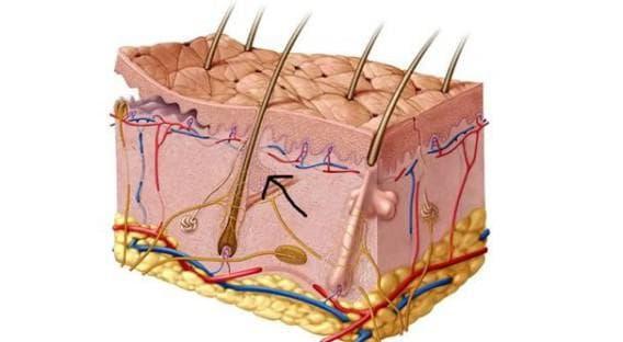 заболевания кожных покровов головы у мужчин